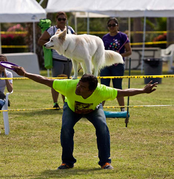 Los Barriles Dog Show - Frisbee Demonstration