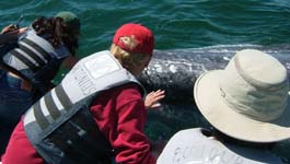Gray Whale Watching in Baja