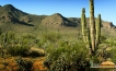 Green desert north of Loreto, Baja California Sur