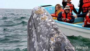 Whale watching in Magdelena Bay in Baja California Sur - Jose Pedraza