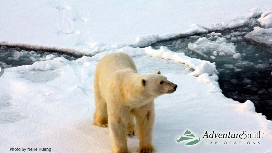 Take an arctic expedition cruise with AdventureSmith Explorations and put a chill in your summer