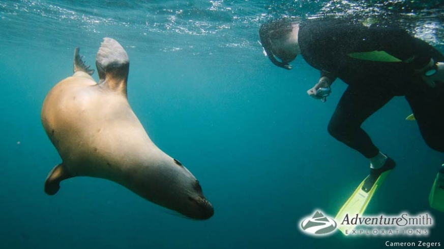 Interaction with a sea lion while snorkeling at Isla Los Islotes