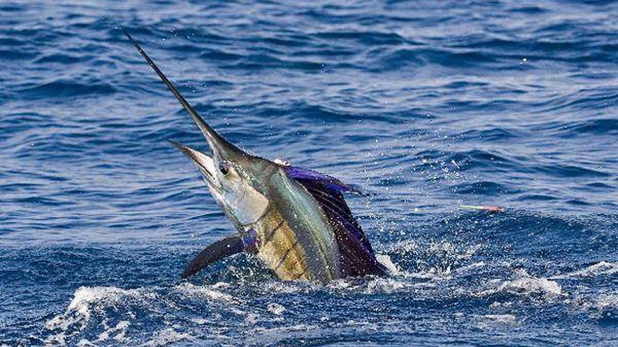 Best times to visit baja california sur for Deep sea fishing in california