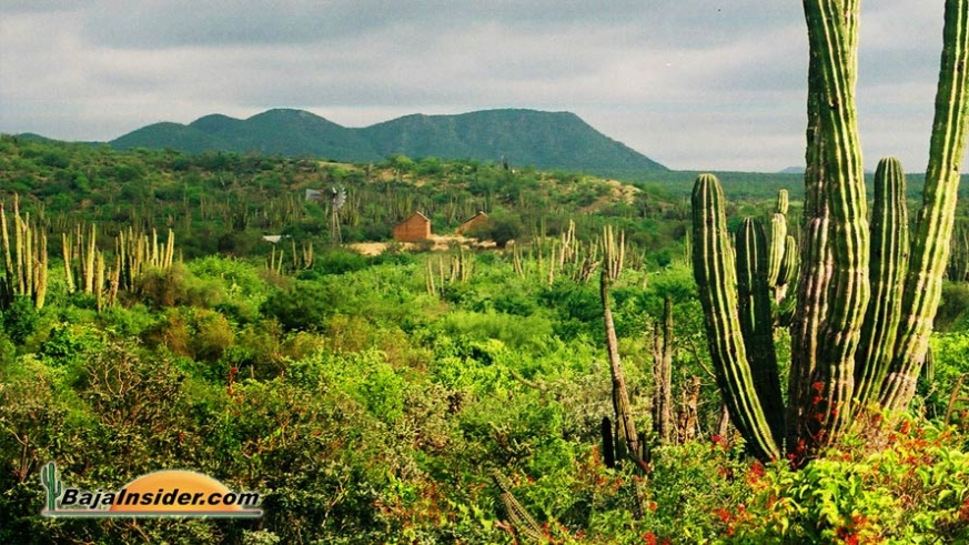 Green desert and adobe ranch house between La Paz and Todos Santos