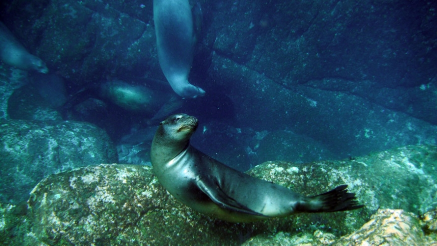 Sea lions play in the rocks just south of Isla Carmen