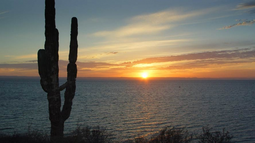Where the cactus meet the Sea, sunset on the Sea of Cortez