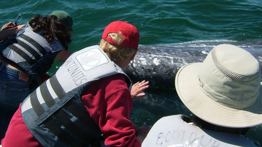 One of the friendly Gray Whales of Baja close enough to touch (Ritchie)