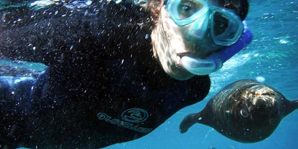 Swimming with Sea Lions at Los Islotes, north of La Paz